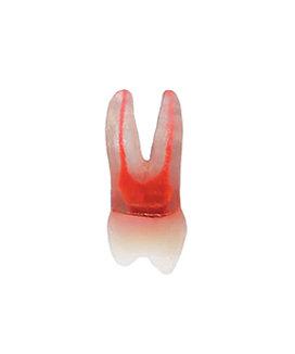 1º Pré-molar Superior Esquerdo Transparente