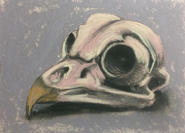 Owl Skull! This is a tiny 8x6 pastel dra