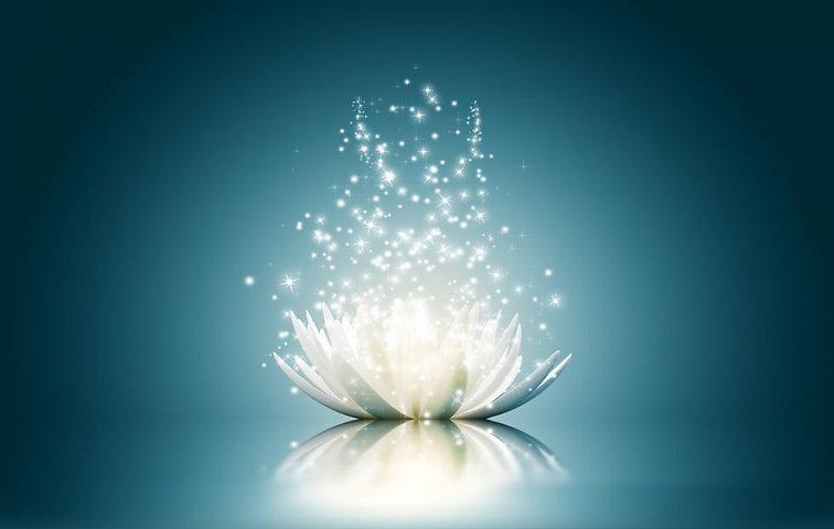 lotus soin.jpeg