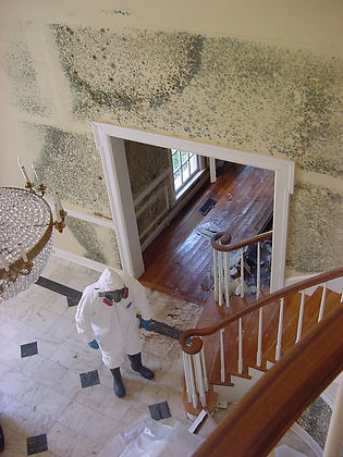 Mold Cleanup & Remediation Services, 773-376-1110, ServiceMaster Restore©, Call for a free estimate.  Serving Chicago-land for over 60 years.