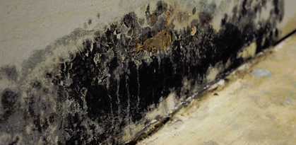 Mold Cleanup, 773-376-1110, ServiceMaster Restore©, Free Estimate, Serving Chicago-land for over 60 years.