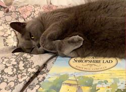 Feline Support