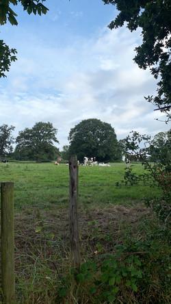 North Shropshire Dairy