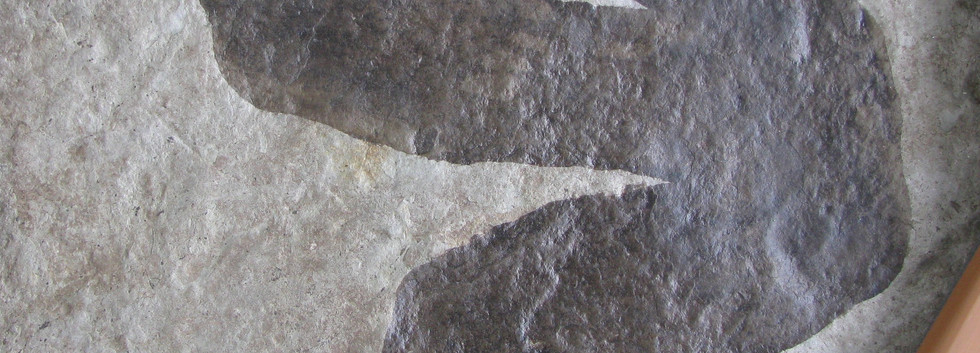 38. Dilophosaurus, Coelophysis Tracks.jp