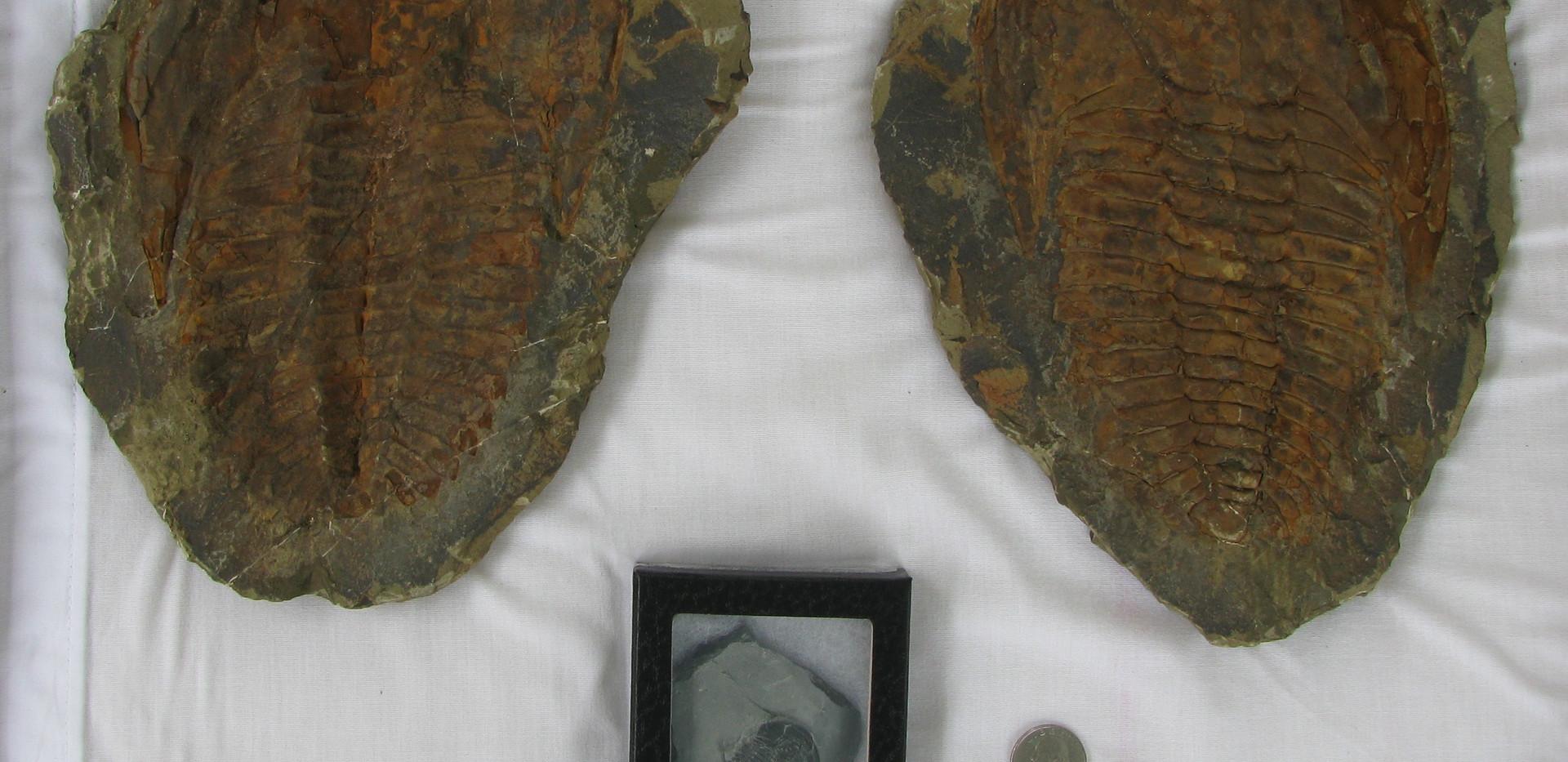 42. Trilobites.jpg