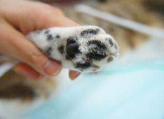 ネコちゃんの爪切り