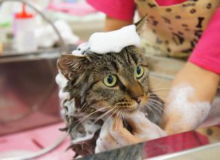 奇跡の猫ちゃんシャンプー