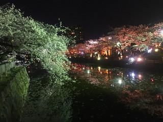 わんこと夜桜