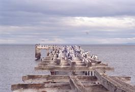 Birds on Pier