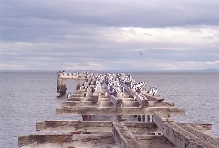 Birds on Pier.jpg