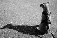 piwi_asphalt.jpg
