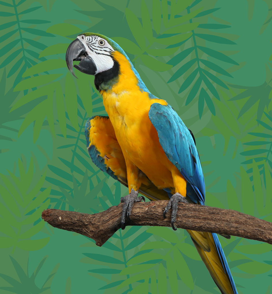 AndyQuest blue and yellow parrot image