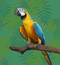 Bleu et jaune perroquet