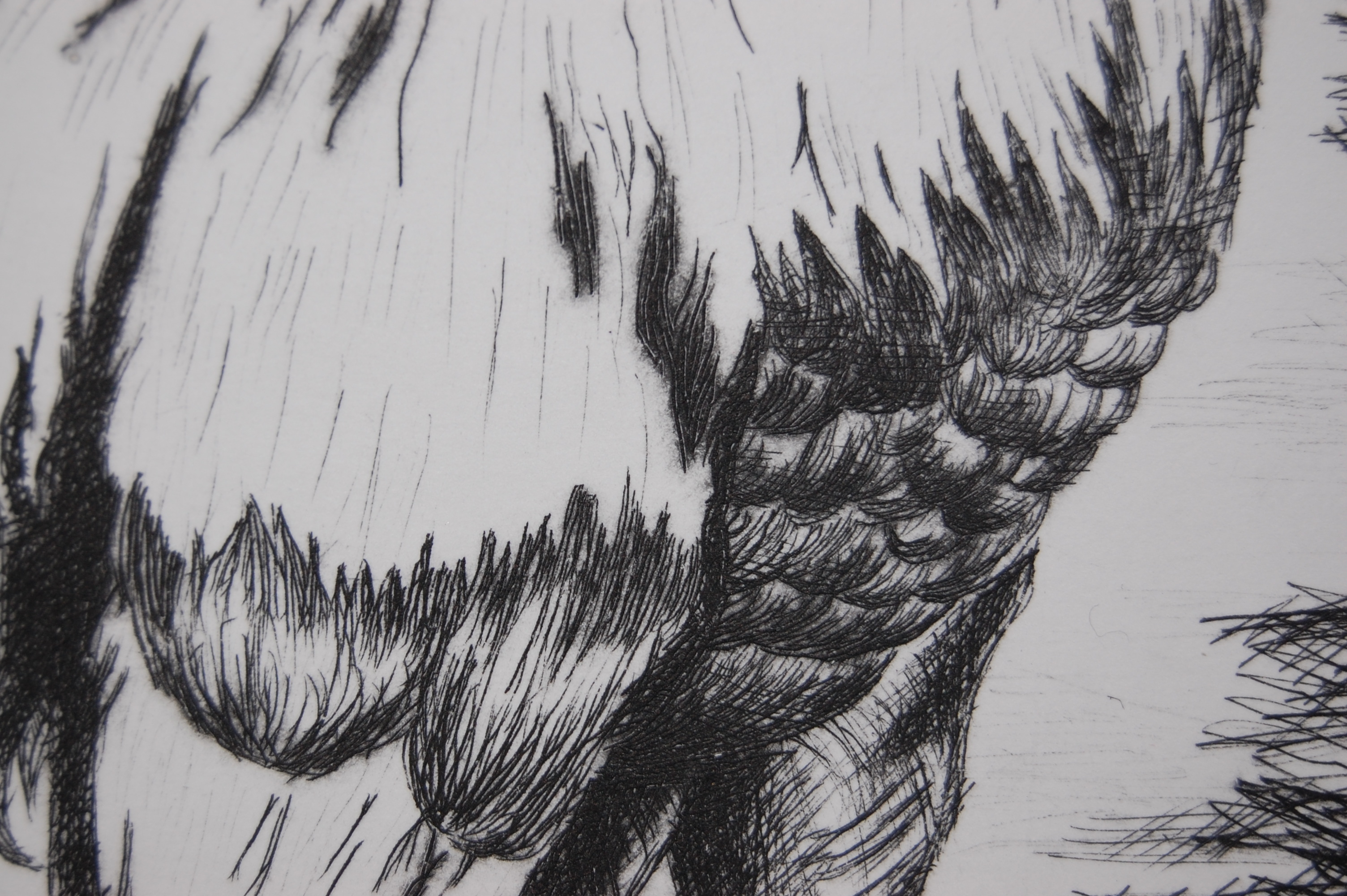 Drypoint Engraving-Detail