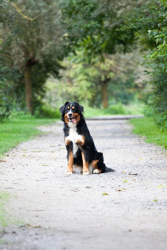 photo canin