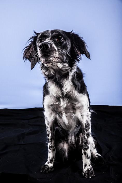 chien lille