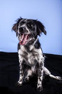 photo canin studio