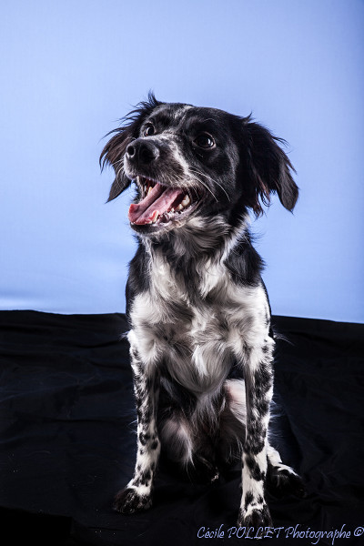 photo chien studio