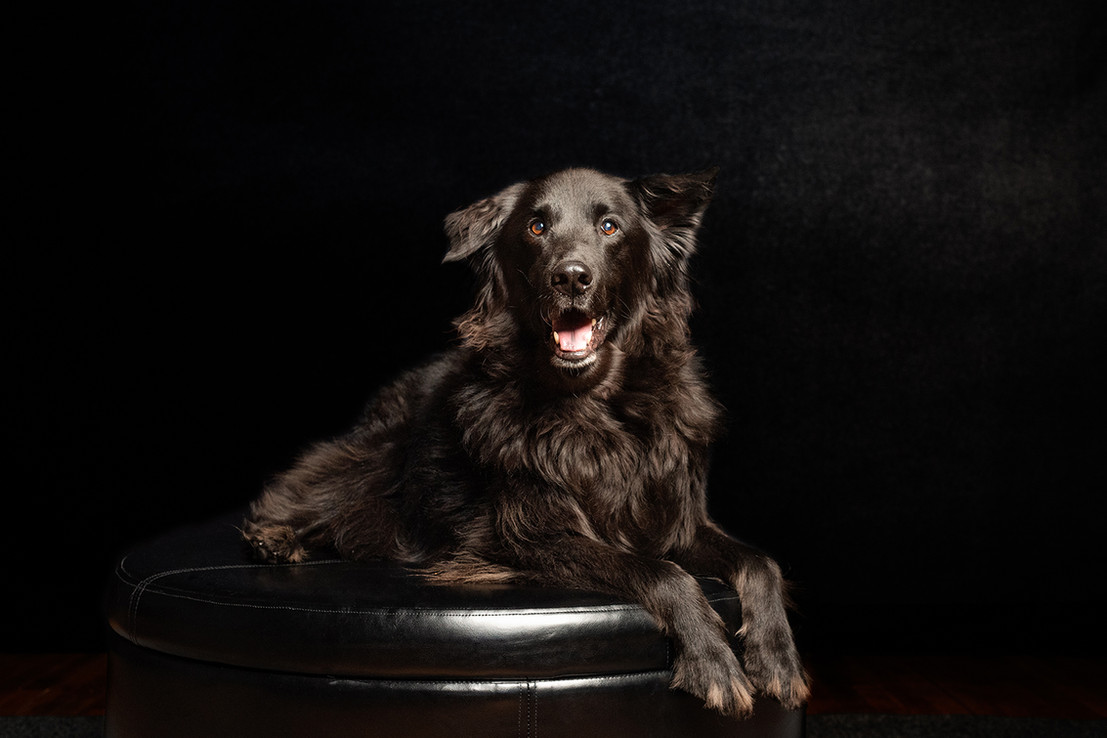 Chicago Pet & Family Photography Studio by Cusic Photography 016