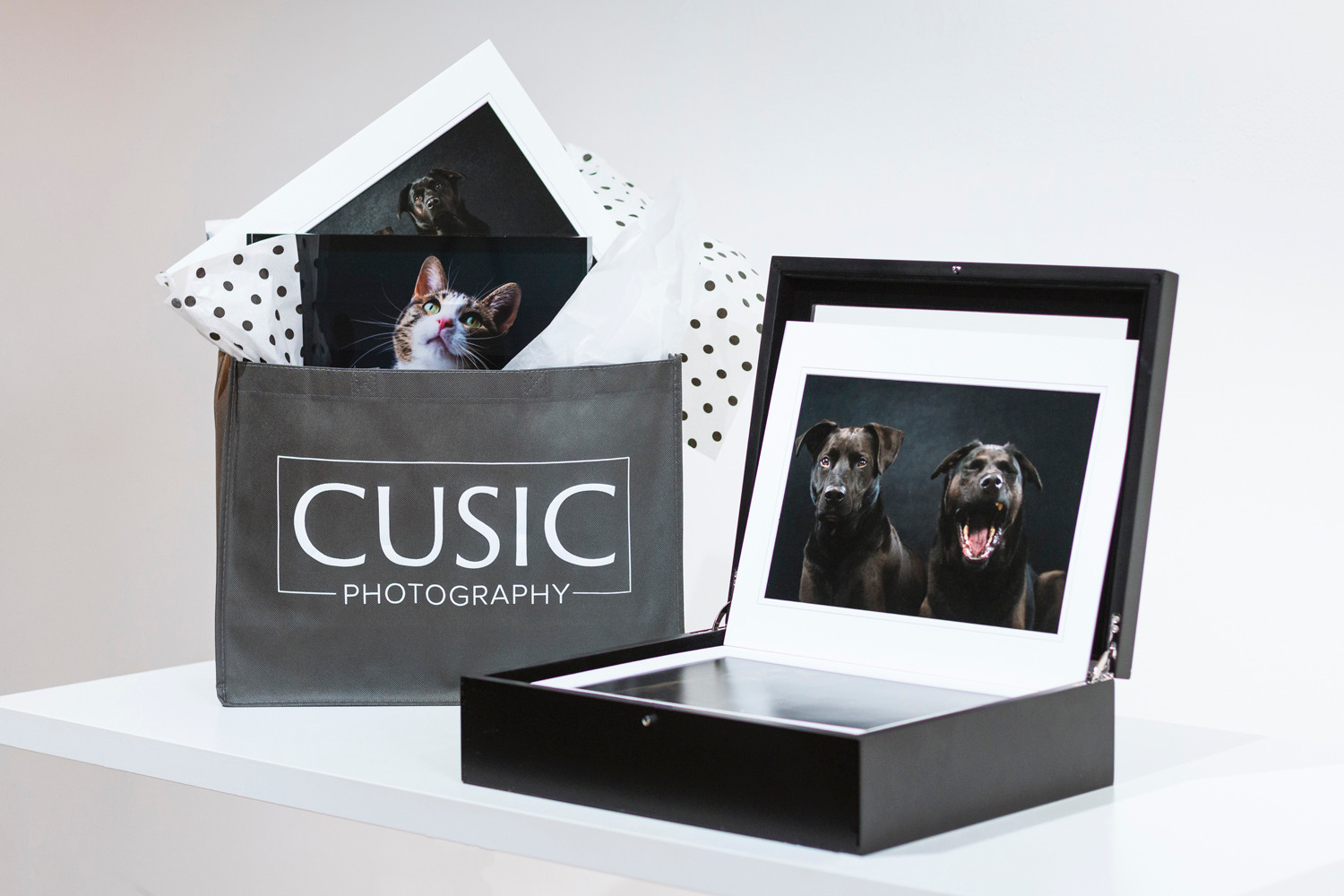 Chicago Dog Photography | Chicago, Illinois | Pet & Family Photography by Cusic Photo 04