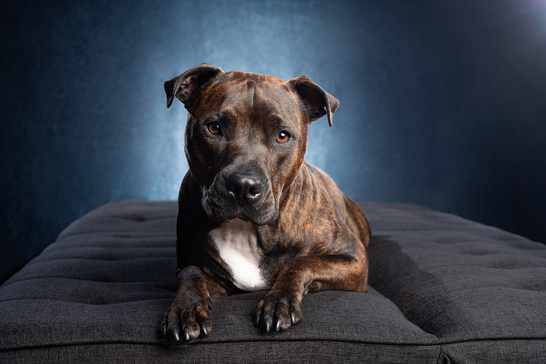Chicago Pet & Family Photography Studio by Cusic Photography 011