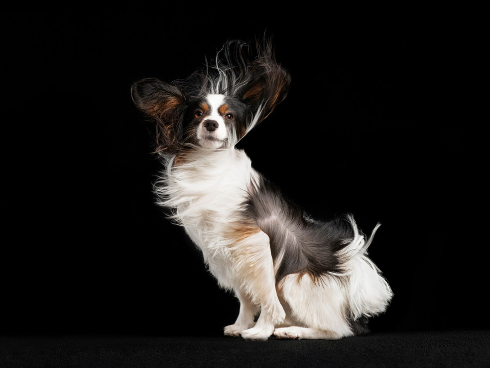 Chicago Pet & Family Photography Studio by Cusic Photography 015