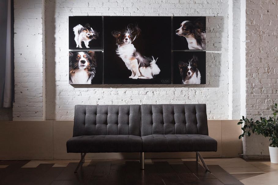 Chicago Dog Photography | Chicago, Illinois | Pet & Family Photography by Cusic Photo 05