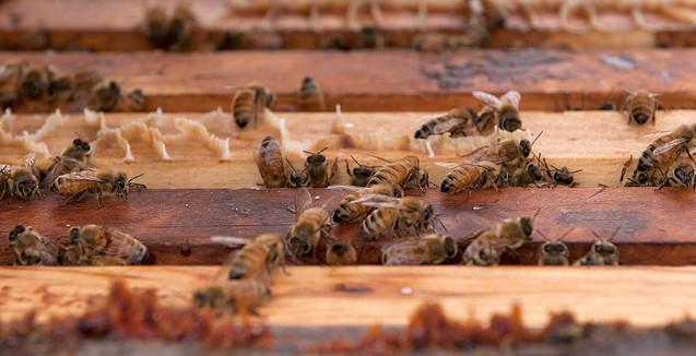 Hard Working Bees