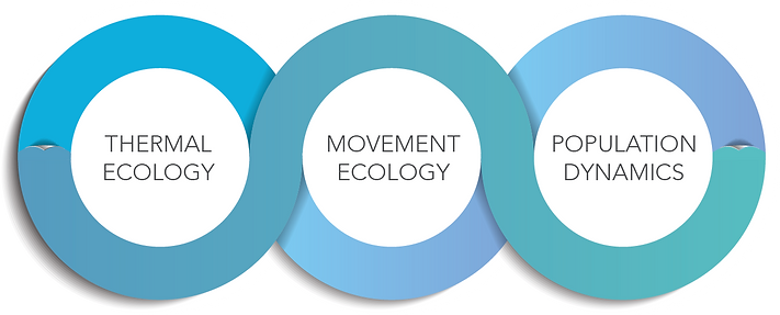 Flowchart of research catergories; Thermal Ecology, Movement Ecology and Population Dynamics