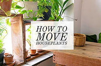 DV BLOG HOW TO MOVE PLANTS PIC.jpg