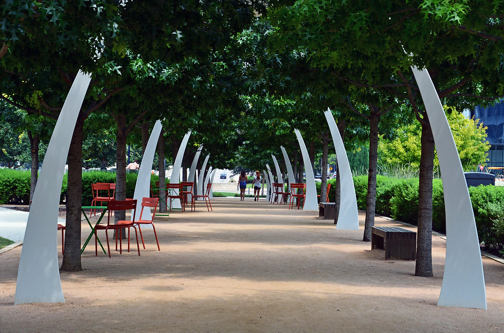 Live oak trees shade seating in summer a