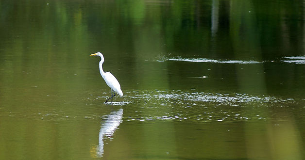 6 - egret header.jpg