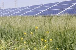 Inside the Solar Farm