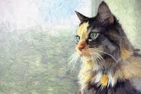 Our Beloved Senior Pets