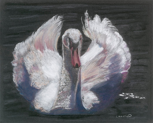 Majestic Swan Limited Edition Print