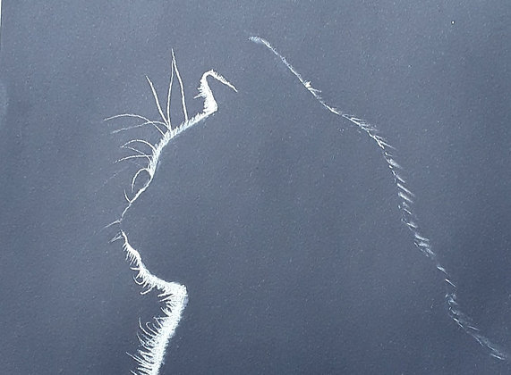 Cat (PRINT)
