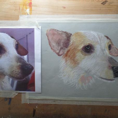 Portrait Progression Plus....