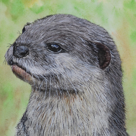 I think it's getting Otter