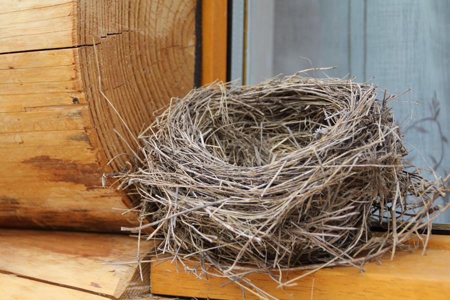 Pialous nid les fustes des pins.png