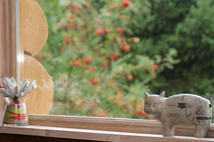 chat les fustes des pins.png