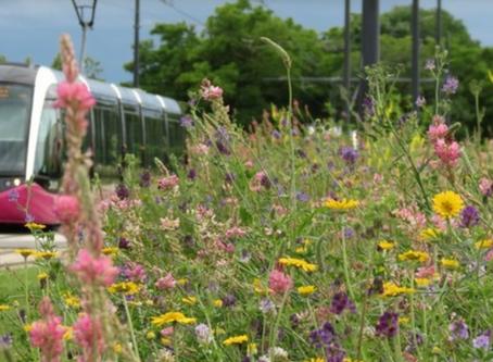 À Dijon : priorité aux fleurs sauvages et aux abeilles !