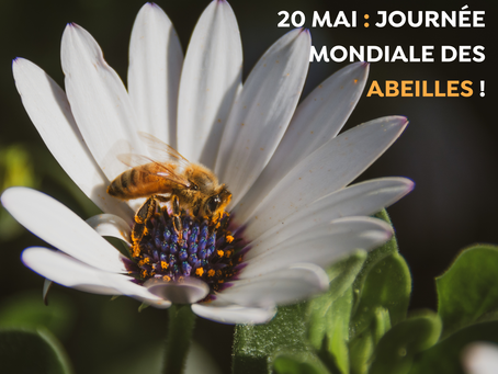 WORLD BEE DAY 2019 !