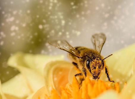 Alors, qu'est-ce qu'un pollinisateur ?