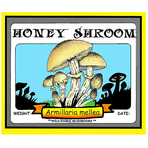 HONEY SHROOM