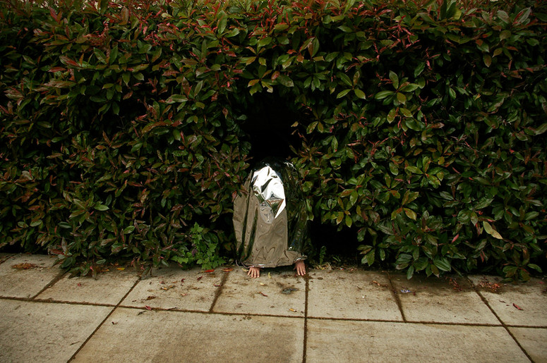 Looking and Hiding Bush