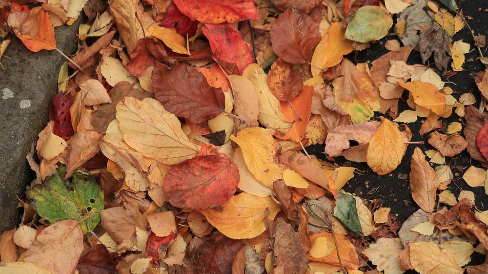Colourful Leaves on the ground