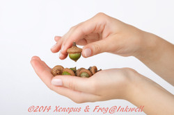 hand picking up hazelnut