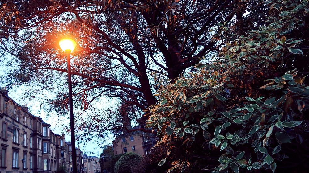 City streetlamp framed by autumn foliage