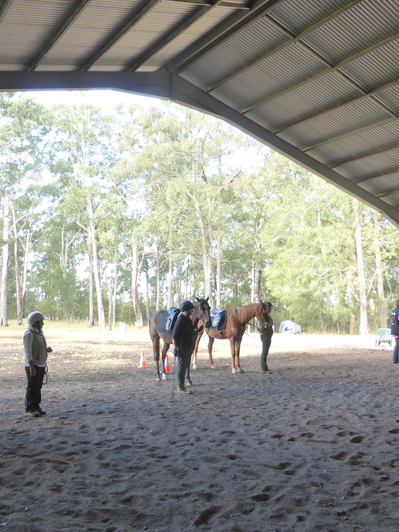 Ground Hire Equestrian Natural Horsemanship