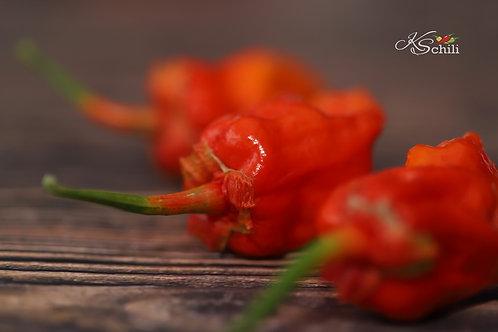 """7 Pot Lava x BBG7"" Pepper 8 Seeds (Capsicum Chinense)"